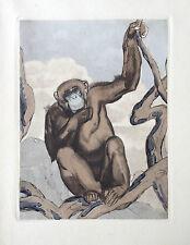 PAUL JOUVE GRAVURE ANIMALIERE ART DECO SINGE MONKEY GORILLE SCIMMIA AFFE