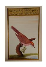 Bird Miniature Painting On Paper With Natural Water Color & Urdu Script Mb105pp