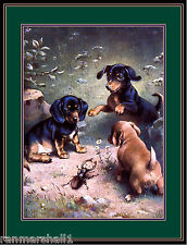 Vintage English Poster Print Dachshund Dog Dogs Puppy Puppies Art Picture