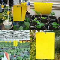 20PCS Dual-Sided Yellow Sticky Traps for Flying Plant Insect  Like Fungus Gnats