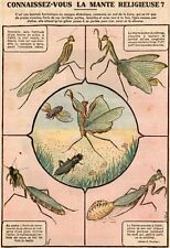 IMAGE 1942 PRINT FOUCHER INSECTE LA MANTE RELIGIEUSE INSECT PRAYING MANTIS