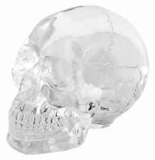 Clear Translucent Skull Statue Sculpture Figurine - WE SHIP WORLDWIDE
