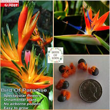 5 BIRD OF PARADISE SEEDS (Strelitzia reginae); Popular ornamental plant