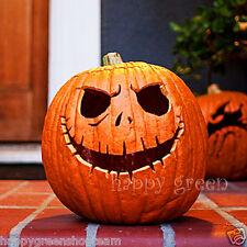 Zucca-Halloween ORO - 25 SEMI-ZUCCA-CUCURBITA PEPO