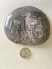DUO OWL EYES FOSSIL CABOCHON - Rarer Colour Moroccan Cabochon 100 mm diameter