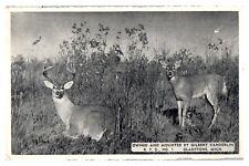 1950s Gilbert Vanderlin Taxidermist, Gladstone, MI Postcard *5F(2)17