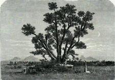Asian Original Botanical Art Prints