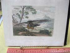 Vintage Print,EAGLE+HARE,Work of Animal,Aesop,Gay,Phaedrus,Howitt,1811