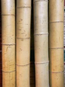 Bambusrohr Bambusstange Bambushalm Bambus Riesenbambus 1 x 9-10 cm x 2 m NEU