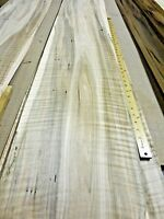 "Spalted Maple Ambrosia Wormy Figured Fiddleback wood veneer 11"" x 126"" raw 1/42"""