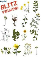 Herbarium * 10 plants to select. delivery time usually 1 Day * CHEAP & GOOD *