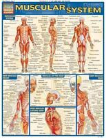 Muscular System Quick Study Academic by BarCharts