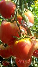 10 graines de tomate rare Cœur de Boeuf italien heirloom tomato seeds méth.bio