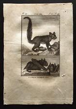 1799 - Buffon - L'aye-aye et la chauve souris - Gravure zoologie