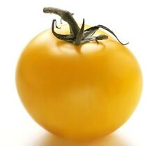 Tomato Gold giant giant yellow golden 100 seeds seeds