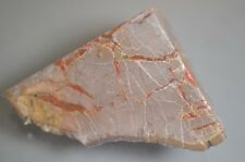 dino coprolite fossil poo from Utah