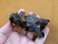 (s800-17) Horn Shark egg case casing Heterodontus educational love sharks Mexico