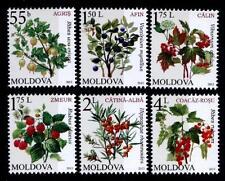 Beeren, Früchte. 6W. Moldawien 2013
