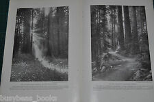 1917 magazine article about SEQUOIA NATIONAL PARK big trees redwoods