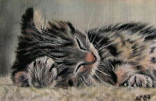 Räumungsverkauf! schlafendes Kätzchen Katze Kunstdruck Druck Bild Photo NEU