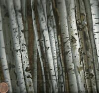 On the Wild Side birch trees Timeless Treasures fabric