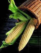 Sweetcorn Seeds - EARLY EXTRA - High Yielding Variety - BULK CORN - 5 lbs Seeds