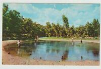 Unused Postcard Bennett Spring State Park Lebanon Missouri MO Fishing