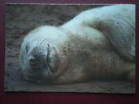 POSTCARD ANIMALS GREY SEAL PUP
