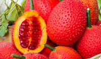 20 Seeds GAC FRUIT, Momordica cochinchinensis, Herb and Vegetables from Thailand