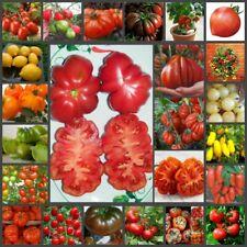 100 Tomato Vegetable Seeds Plant Solanum Pomiferum Big Delicious Red White Green