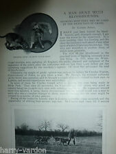 Manhunt Bloodhounds Babbo Man Tracker Dog Rare Old Victorian 1898 Photo Article