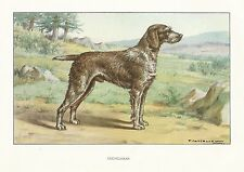1930s Watercolor Art Print Dog Castellan German Wirehaired Pointer / Stichelhaar