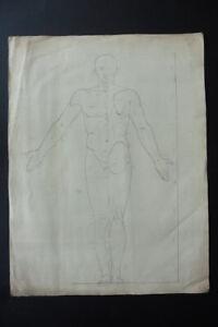 FLEMISH SCH. CA. 1800 - ANATOMICAL STUDY MALE NUDE - CHARCOAL STUDIO VAN BREE