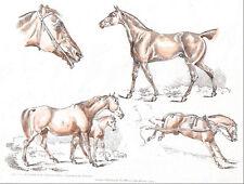 1821 vintage HORSE SKETCHES by HENRY ALKEN original handpainted engraving