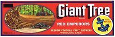 CRATE LABEL GIANT TREE SEQUOIA VINTAGE TULARE CO. C1940 ORIGINAL CLASSIC CARS 2