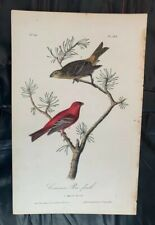 """SUSAN HALL /""""BLACK BEAUTY/"""" Hand Signed Limited Edition 1980 Lithograph Bird Art"""