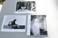 Rare MUPPETS Jim Henson Photo Set Lot 3 HEY CINDERELLA! 8x10 Stills 1969 Kermit