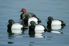 Avery Greenhead Gear Foam Filled Over-Size 6 Bluebill Scaup Decoys Ghg