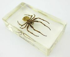 fashion spider big insect  In Lucite Paperweight Crafts YYS004