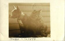"""1909 Vintage Dog rppc~Pit Bull Terrier named """"Trouble"""" & Cat Friend~Real Photo"""