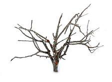 "10 5""-7"" SAGEBRUSH Deciduous Railway Railroad Diorama TREE ARMATURES + DEAD FALL"