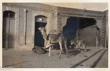 BL814 Carte Photo vintage card RPPC Dromadaire chameau Ane mulet Afrique du Nord