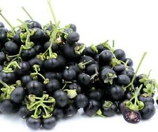 Wonderberry Seeds ~Solanum retroflexum (Burbankii)~ Sunberry~ Garden Huckleberry