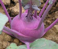 500 PURPLE VIENNA KOHLRABI SEEDS HEIRLOOM 2017 (non-gmo heirloom vegetable seed)