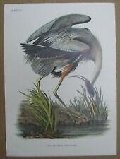 Audubon: Great Blue Heron; Number 211/2000; Plate CCXI