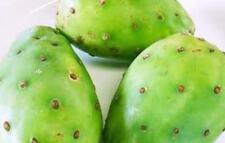 1 Cutting, Cactus Pad, Green Fruit Prickly Pear, Opuntia ficus indica