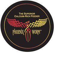 Phoenix Worms Large 100 Count BSFL