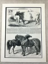 Royal Agricultural Show Stallion Horse Shorthorn Bull Victorian Antique Print