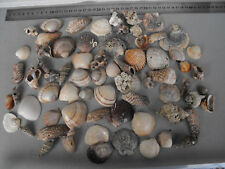 BEAUTIFUL LOT OF SEA SHELLS   #1214