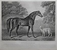 1831 ANTIQUE FARRIER HORSE PRINT ~ DUNGANNON